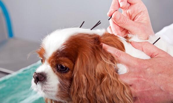 Acupuncture-2