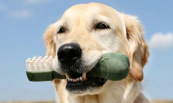 Pet Dental Care in Sandy Springs