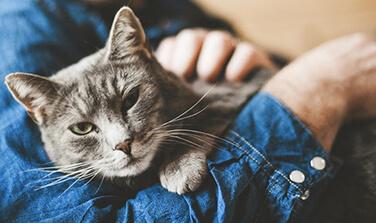 Preventative-Care-for-Cats