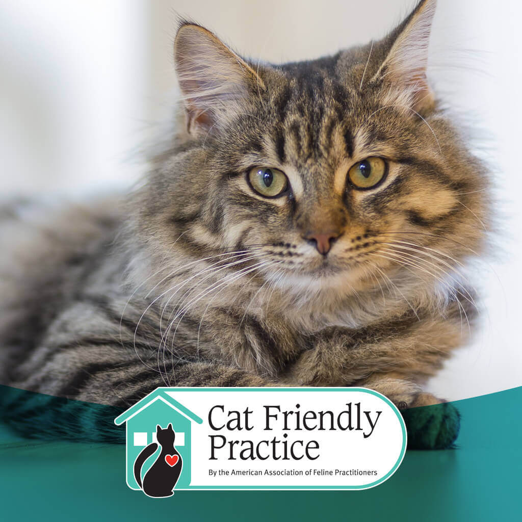 We're now a certified Cat Friendly Practice!