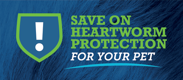 Heartworm Promotion | Animal Hospital of Sandy Spring, Atlanta, GA