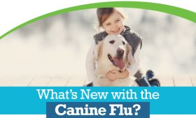 Canine Influenza Updates | Animal Hospital of Sandy Springs