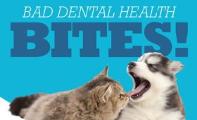 August Dental Special | Animal Hospital of Sandy Springs