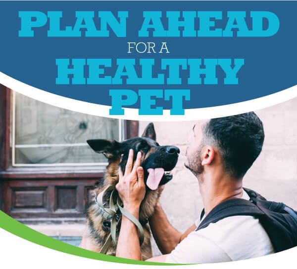 Pet Health Insurance | Animal Hospital of Sandy Springs