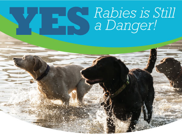 World Rabies Day | Animal Hospital of Sandy Springs