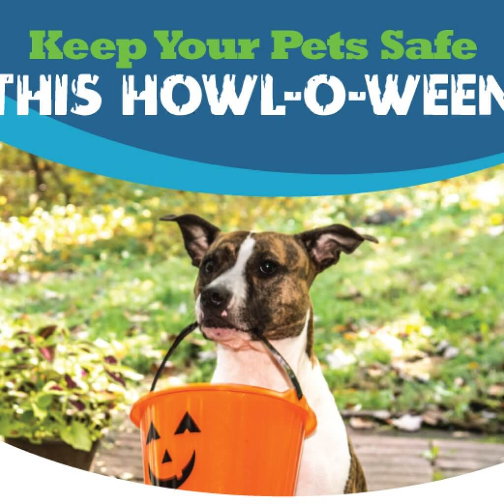 Halloween Pets Safety Tips | Animal Hospital of Sandy Springs