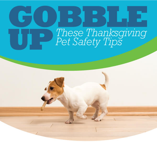 Thanksgiving Pet Safety | Animal Hospital of Sandy Springs