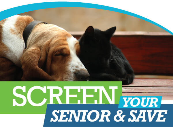 Senior Screening Special | Animal Hospital of Sandy Springs