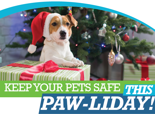 Holiday Pet Tips | Animal Hospital of Sandy Springs