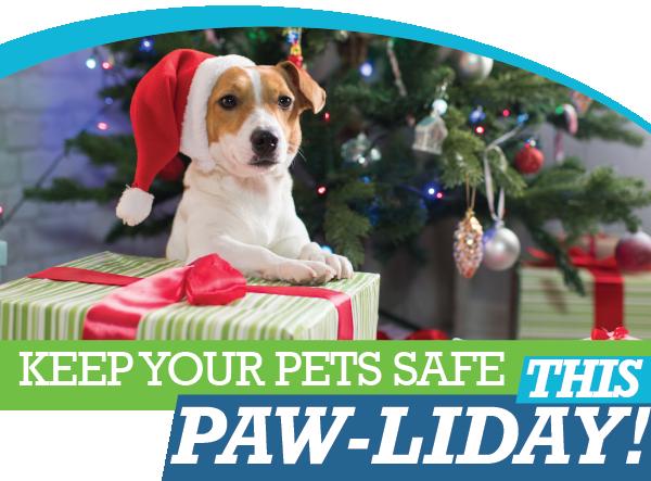 Holiday Pet Tips   Animal Hospital of Sandy Springs