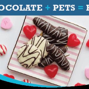 Chocolate + Pets = Bad