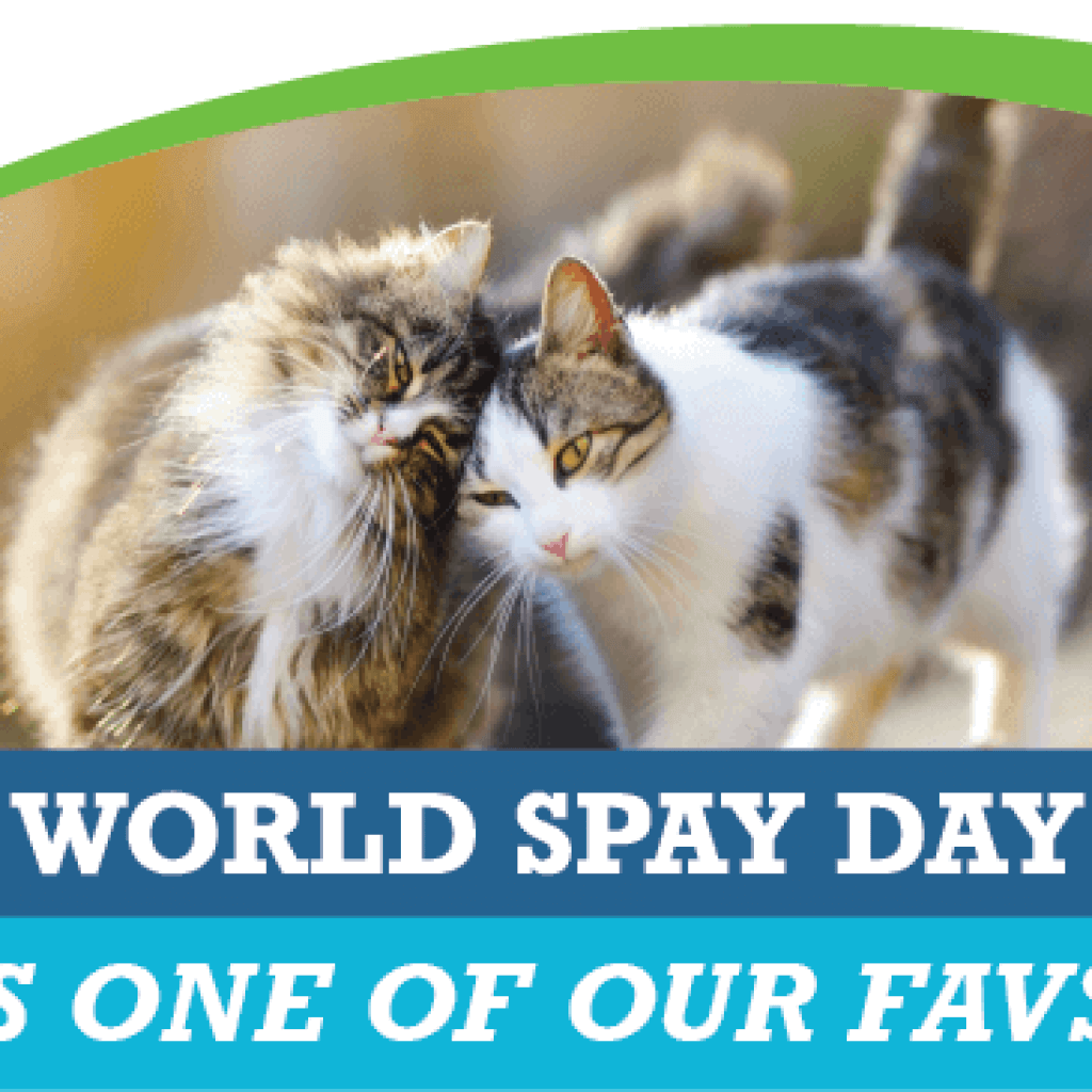 World Spay Day is One of Our Favs!