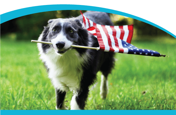 Five Tips for the 4th: Pet Safety Tips