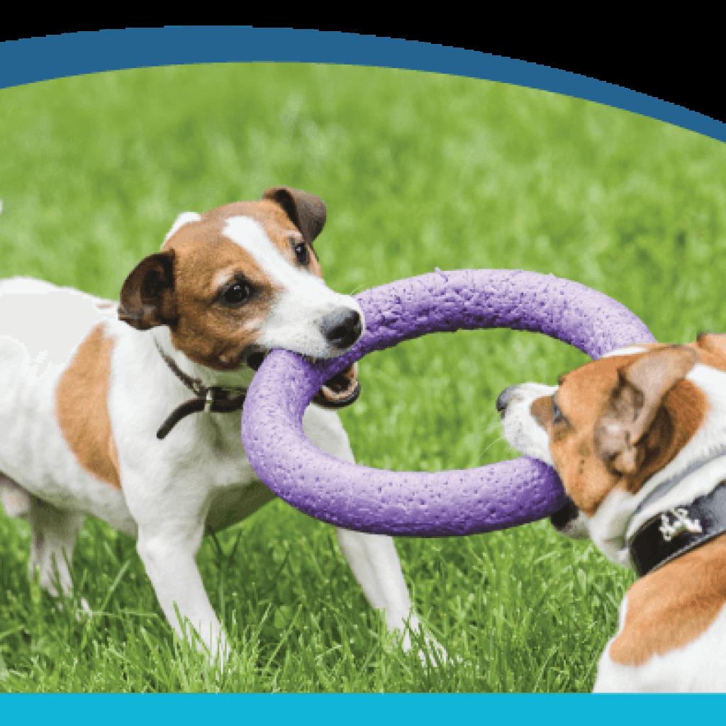 Leptospirosis: The Backyard Threat