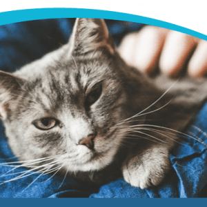 1 in 3 Senior Cats Will Develop Kidney Disease Early Detection is Key