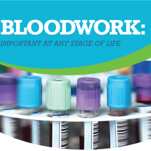 The importance of bloodwork - Animal Hospital of Sandy Springs
