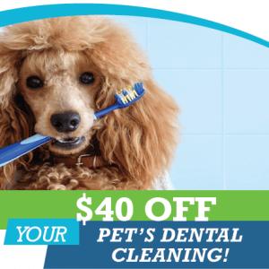 Save $40 on pet dentals - Animal Hospital of Sandy Springs