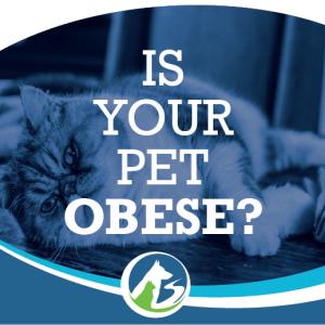 Pet Obesity - Animal Hospital of Sandy Springs