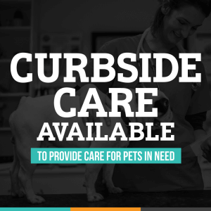 Curbside Care For Your Protection - Animal Hospital of Sandy Springs