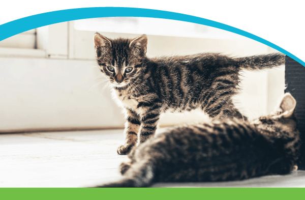Your New Pet's First Steps are Big Ones.